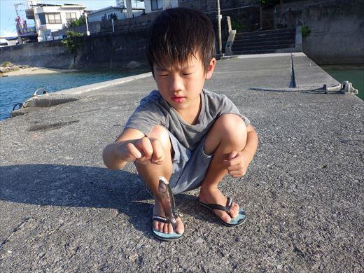 奥武島の堤防で (11)