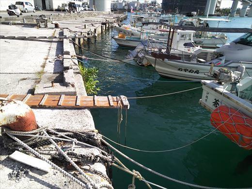 泊港でハリセンボン (3)