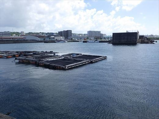 宜野湾漁港へ (17)_R