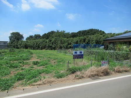 大角豆2012-1078