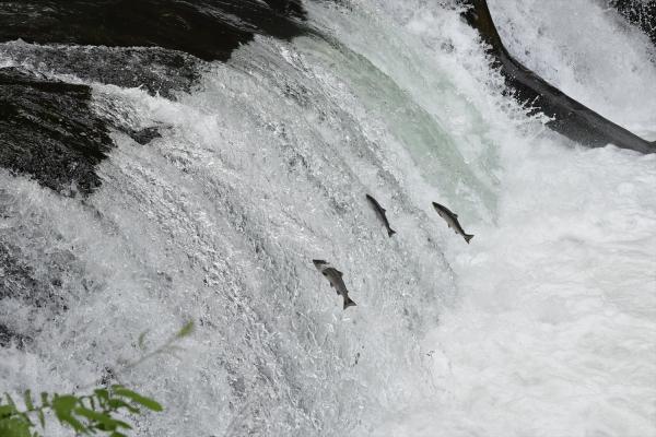 さくらの滝20190611-2