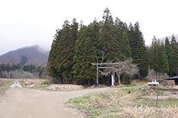 190425高尾神社の大スギ⑧