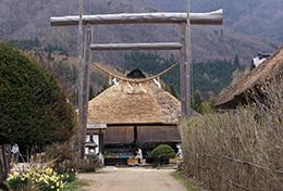 190425高尾神社の大スギ⑫