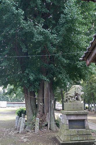190724鴻巣上谷氷川神社③