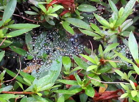 0710蜘蛛のお絵かき