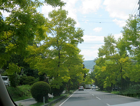 0829白樺湖・黄金アカシヤ