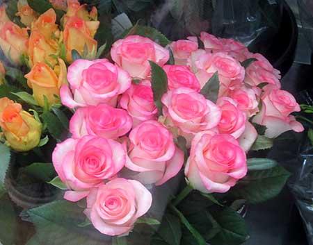 0901薔薇