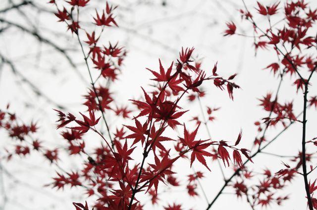 茨城の自然