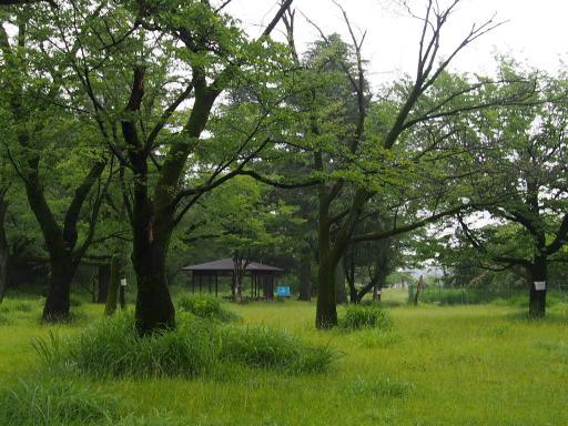 20190705・いつもの狭山湖1-18