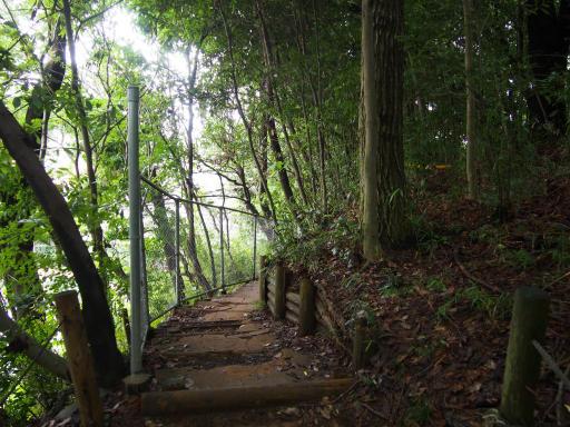 20190705・いつもの狭山湖2-11・トトロの森最後の階段