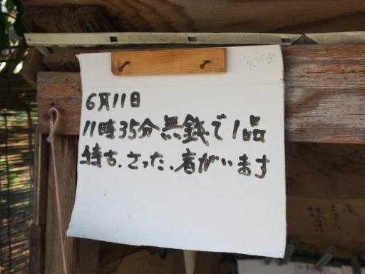 20190804・8月4日散歩植物おまけ4・中