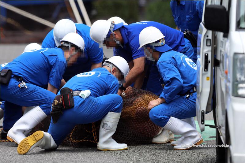 愛媛県立とべ動物園 ・ 動物脱出対策訓練の写真