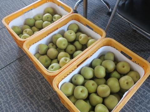 「父の実家から梨が届きました!」①