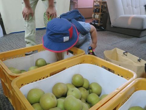 「父の実家から梨が届きました!」②