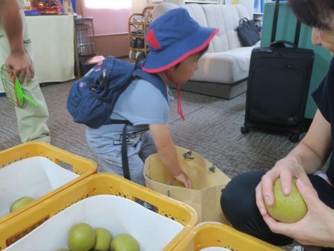 「父の実家から梨が届きました!」④