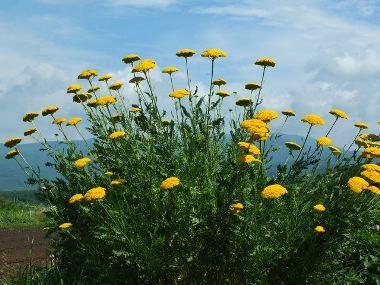 16別の黄色い花0725