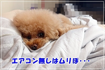 DSC_7188.jpg