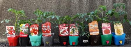 5月18日 トマトの苗