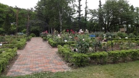 雪印種苗園芸センター バラ見本園
