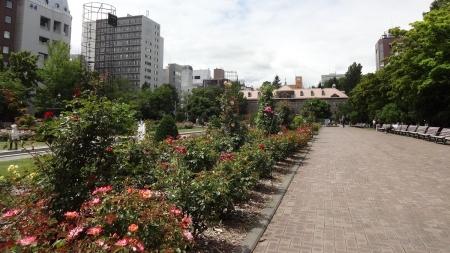 大通公園 バラ園