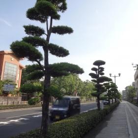7:43 街路樹