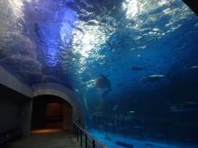 9:34 水中トンネル