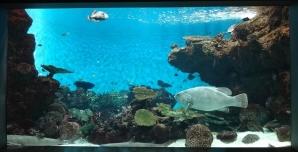 9:38 サンゴ礁水槽