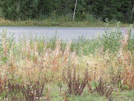 緑と枯れ草