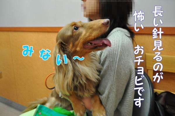 DSC_0004201110.jpg