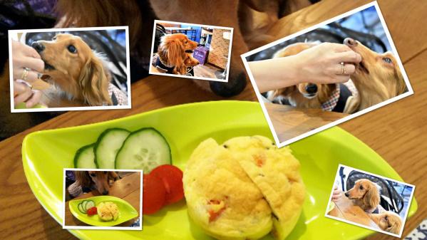 collage_photocat20190709001.jpg