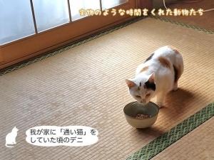 我が家に「通い猫」をしていた頃のデニ
