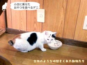 小皿に乗せたおやつを食べるデニ