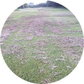 2 刈り取った草・草・草