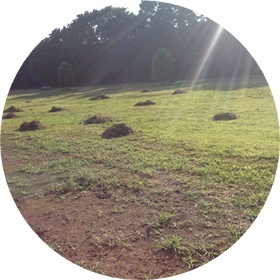 11 いたるところに草草だらけ