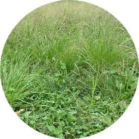 3 草ぼうぼう