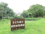 サツマイモ畑①