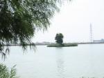 天満大池①