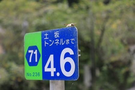 3J4A6287.jpg