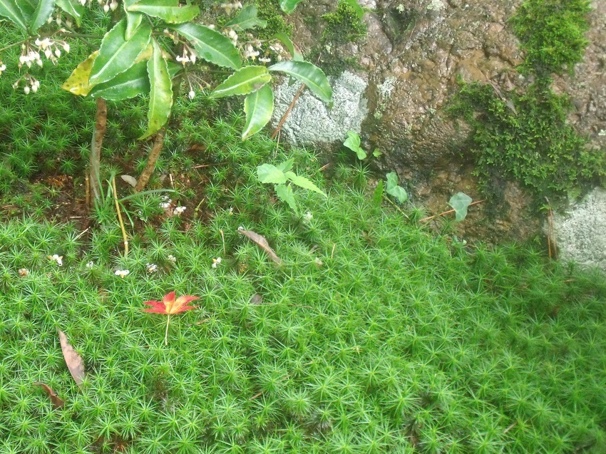 苔の美しさ