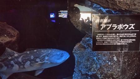 20190405深海水族館5