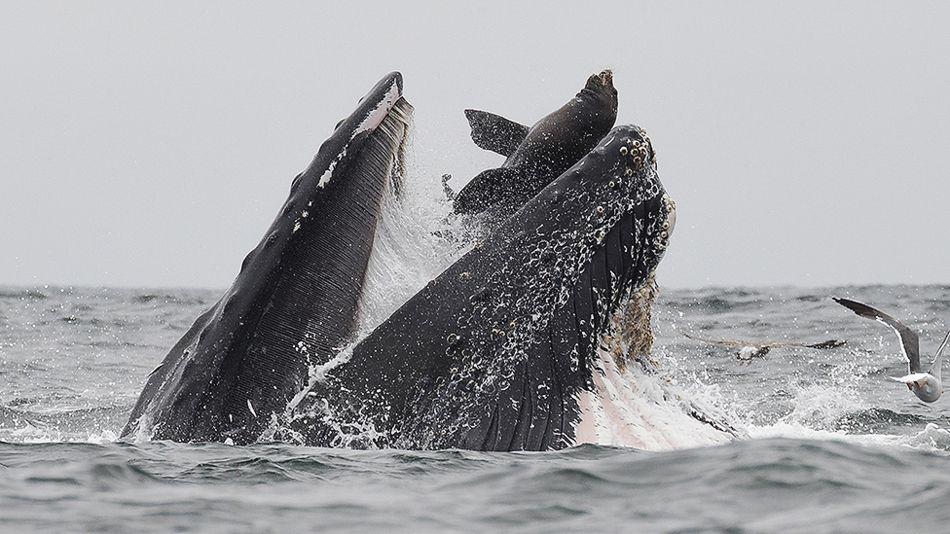 _108111476_whale1.jpg