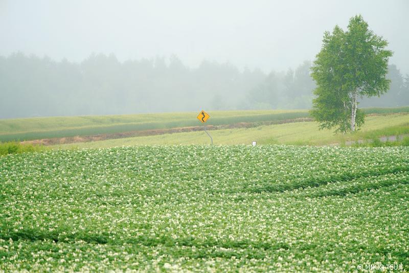 絶景探しの旅 - 1005 黄色い標識のある丘 (北海道 美瑛町)