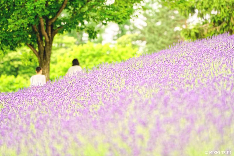絶景探しの旅 - 1007 ラベンダーの丘 (北海道 中富良野町)