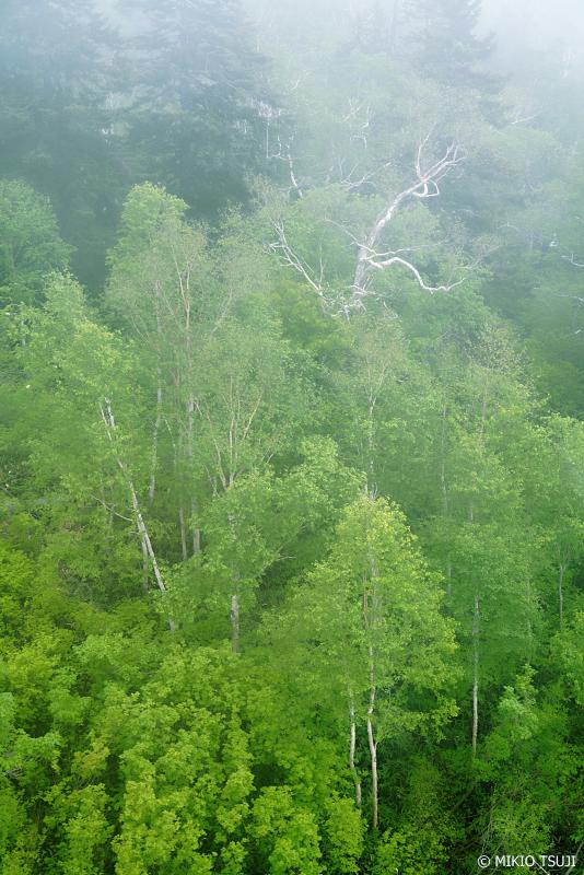 絶景探しの旅 - 1013 霧の山麓 (北海道 東川町)