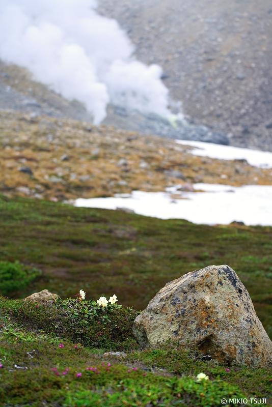 絶景探しの旅 - 1018 噴煙の大地に咲くキバナシャクナゲ (旭岳/北海道 東川町)