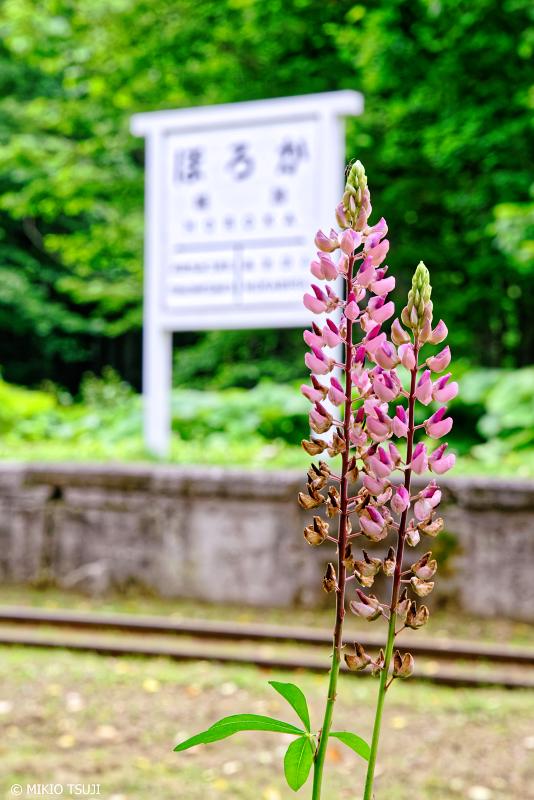 絶景探しの旅 - 1032 ルピナスと幌加駅跡 (北海道 上士幌町)