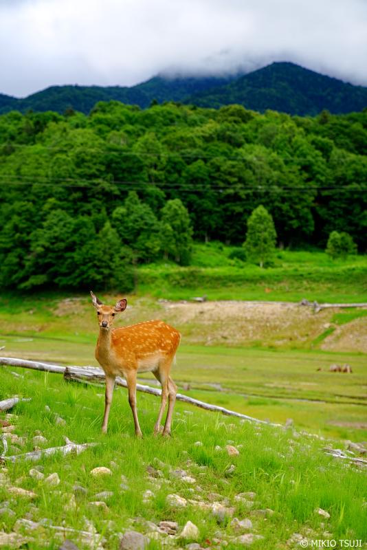 絶景探しの旅 - 1041 突然の訪問者 (タウシュベツ川橋梁/北海道 上士幌町)