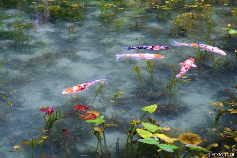 絶景探しの旅 - 1047 名もなき池 「通称:モネの池」 (岐阜県 関市)
