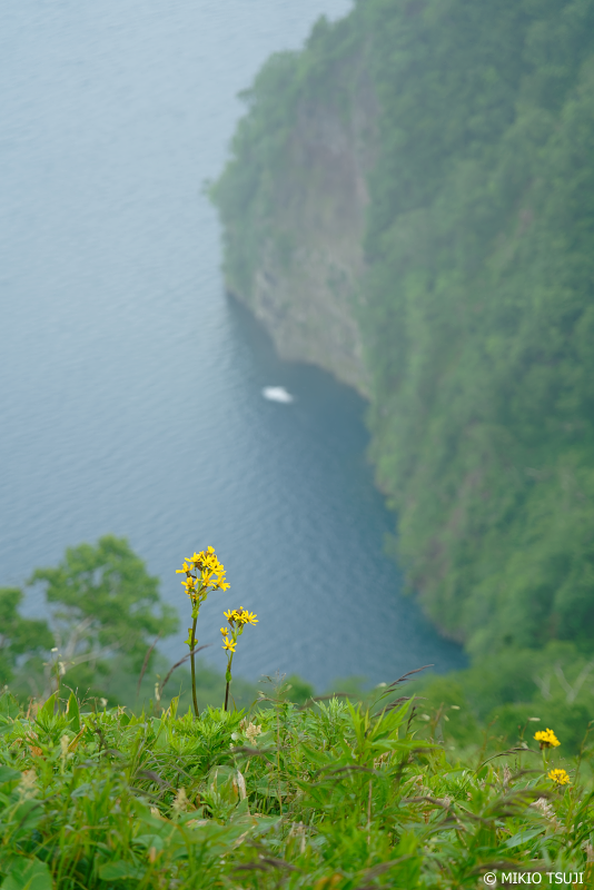 絶景探しの旅 - 1058 湖面を臨む花 (摩周第三展望台/北海道 弟子屈町)